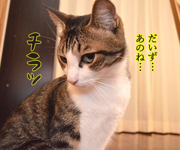 ケンカしちゃった 猫の写真で4コマ漫画 2コマ目ッ