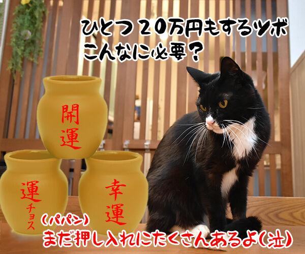 猫さんにもツボがあるんですってッ 猫の写真で4コマ漫画 4コマ目ッ