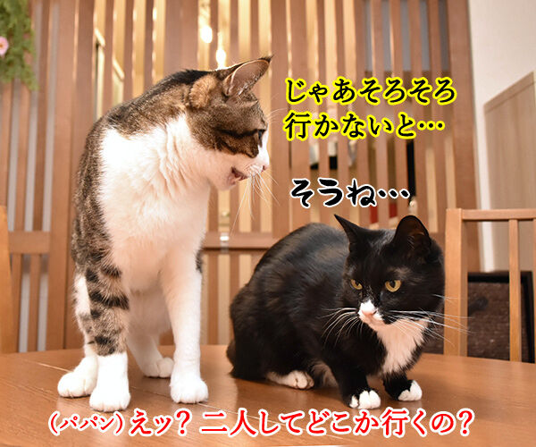 母の日のプレゼントはクロネコヤマトで 猫の写真で4コマ漫画 3コマ目ッ