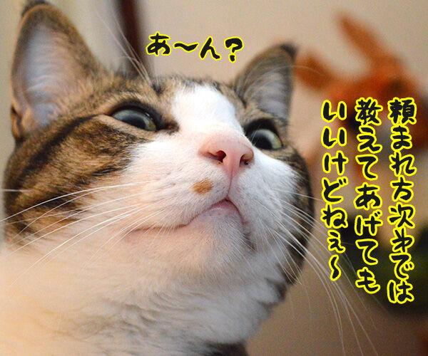 エビキャッチ 其の二 猫の写真で4コマ漫画 2コマ目ッ
