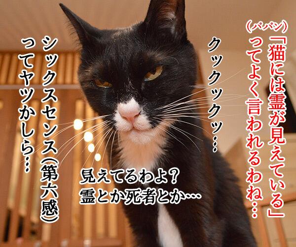 猫さんのシックスセンス 猫の写真で4コマ漫画 1コマ目ッ