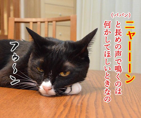 鳴き声でわかる猫のきもち 猫の写真で4コマ漫画 2コマ目ッ