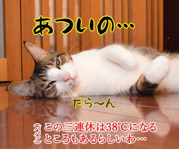 各地で猛暑なんですってッ 猫の写真で4コマ漫画 1コマ目ッ