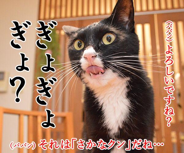 ドクターXごっこ「御意ッ」 猫の写真で4コマ漫画 2コマ目ッ