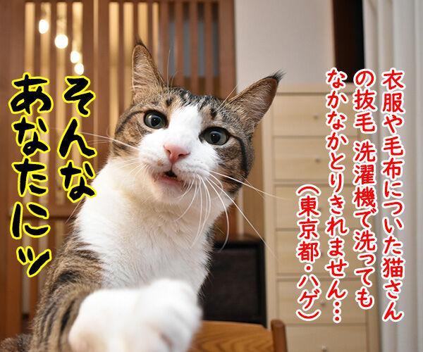 一緒に洗濯するだけで猫さんの毛を絡み取るスポンジがあるんですってッ 猫の写真で4コマ漫画 1コマ目ッ