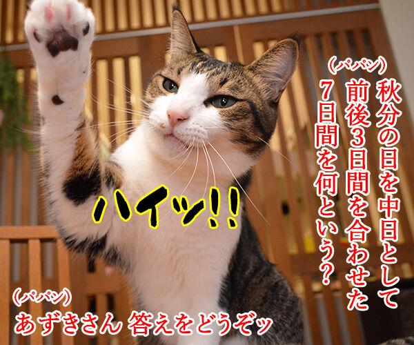 「秋分の日」でクイズですッ!! 猫の写真で4コマ漫画 1コマ目ッ