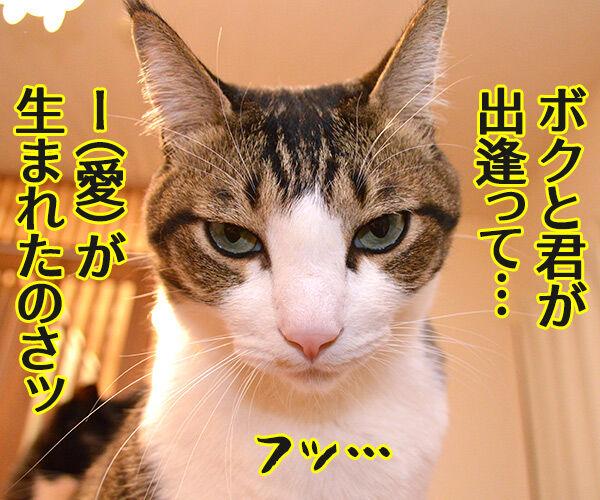 あま~いッ 猫の写真で4コマ漫画 3コマ目ッ