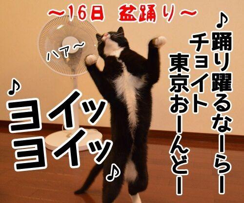 お盆 猫の写真で4コマ漫画 4コマ目ッ