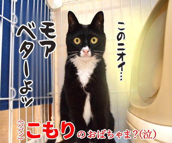 だいずさんがトイレにこもってるのッ 猫の写真で4コマ漫画 4コマ目ッ