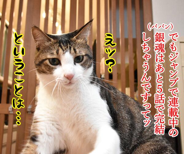 漫画「銀魂」が最終回まで残り5話なんですってッ 猫の写真で4コマ漫画 3コマ目ッ