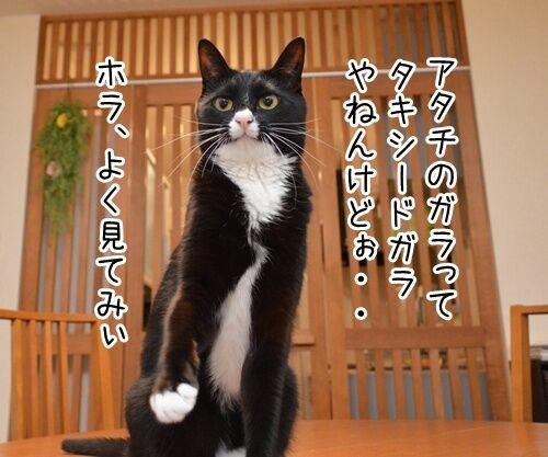 やねんけど 猫の写真で4コマ漫画 1コマ目ッ