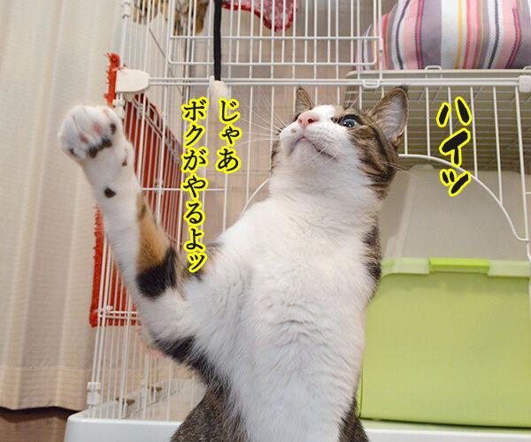 どうぞどうぞ 其の二 猫の写真で4コマ漫画 3コマ目ッ
