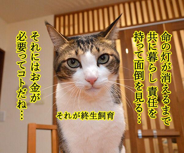 ペットを飼うには経済力は必要か? 猫の写真で4コマ漫画 3コマ目ッ