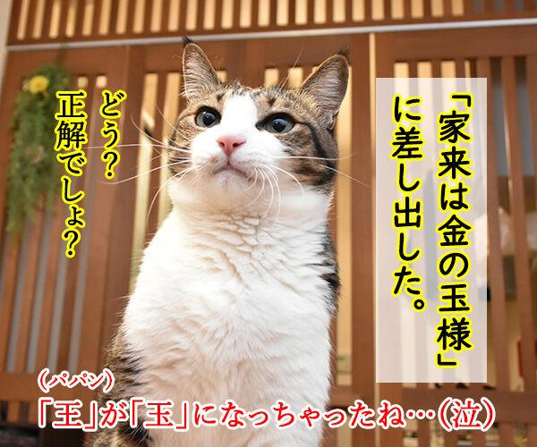 抜き打ちで漢字のテストをするのよッ 猫の写真で4コマ漫画 3コマ目ッ