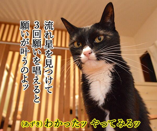 流流れ星にお願いをしてみたのッ 猫の写真で4コマ漫画 1コマ目ッ