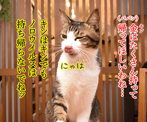 平昌オリンピックが始まったわねッ 猫の写真で4コマ漫画 2コマ目ッ