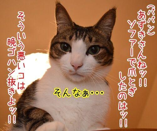 悪いコは… 猫の写真で4コマ漫画 1コマ目ッ