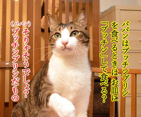 プッチン「する派」「しない派」 あなたはどっち? 猫の写真で4コマ漫画 1コマ目ッ