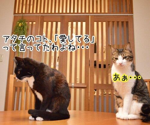 愛してるって言って 猫の写真で4コマ漫画 1コマ目ッ