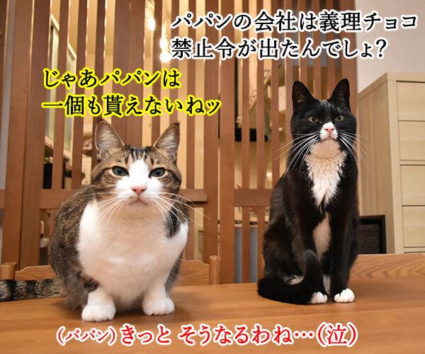 パパンの会社は義理チョコ禁止令だから… 猫の写真で4コマ漫画 1コマ目ッ
