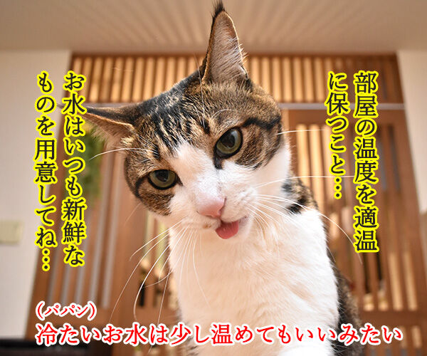 猫さんは寒くてお水飲まないと下部尿路疾患になっちゃうのよッ 猫の写真で4コマ漫画 2コマ目ッ