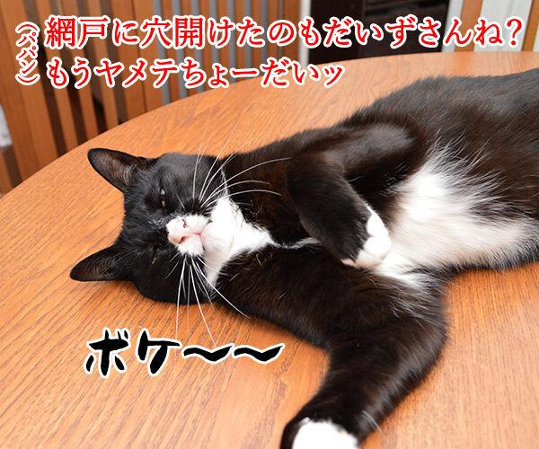 パパンのお説教 猫の写真で4コマ漫画 2コマ目ッ