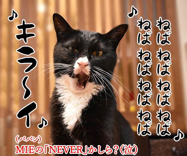 7月10日は『納豆』の日なんですってッ 猫の写真で4コマ漫画 4コマ目ッ