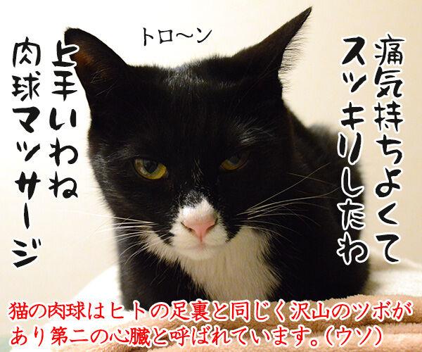 叫ぶ理由 猫の写真で4コマ漫画 4コマ目ッ