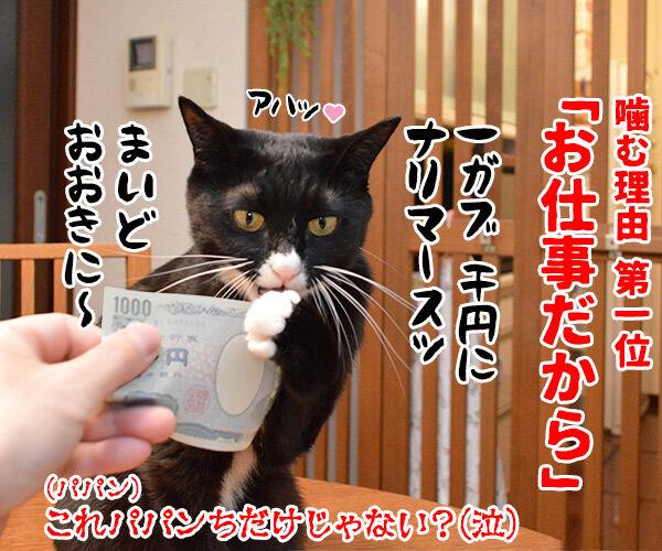 猫が噛む理由 猫の写真で4コマ漫画 4コマ目ッ