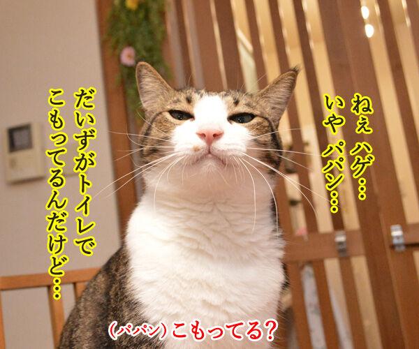 だいずさんがトイレにこもってるのッ 猫の写真で4コマ漫画 1コマ目ッ