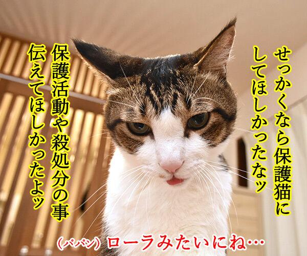 あのヒトが猫を飼い始めたんですってッ 猫の写真で4コマ漫画 2コマ目ッ