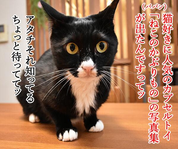 カプセルトイ『ねこのかぶりもの』の写真集が出たんですってッ 猫の写真で4コマ漫画 1コマ目ッ