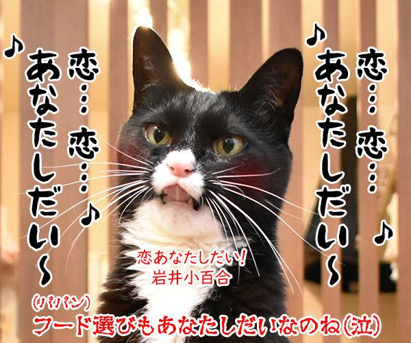 キャットフードを選ぶのは…? 猫の写真で4コマ漫画 4コマ目ッ