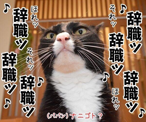辞職ッ それッ 辞職ッ 猫の写真で4コマ漫画 1コマ目ッ