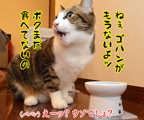 とにかく明るいあずき 猫の写真で4コマ漫画 1コマ目ッ