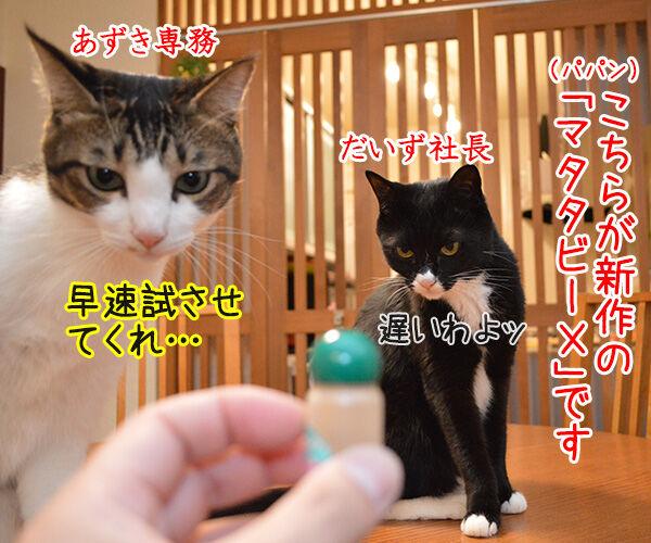マタタビーX 猫の写真で4コマ漫画 1コマ目ッ