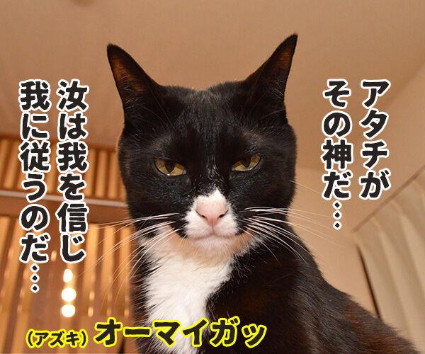 アナタハシンジマスカ? 猫の写真で4コマ漫画 2コマ目ッ