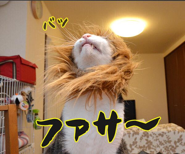 かまやつヘアーは 猫の写真で4コマ漫画 1コマ目ッ