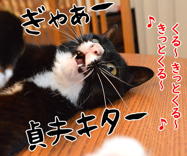 夏はホラーで涼しくなるのッ 猫の写真で4コマ漫画 2コマ目ッ