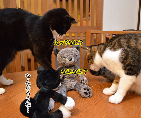 おともだちを紹介するよッ 猫の写真で4コマ漫画 3コマ目ッ