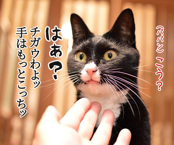 ほらッほらッ 猫の写真で4コマ漫画 3コマ目ッ