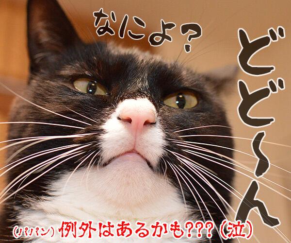 猫のオスとメスを見分けるコツ 猫の写真で4コマ漫画 4コマ目ッ