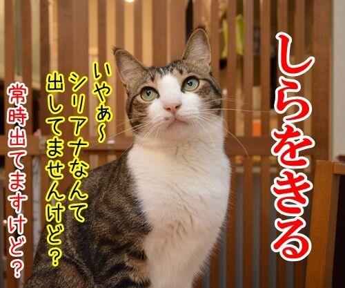 国語の授業 其の二 猫の写真で4コマ漫画 3コマ目ッ