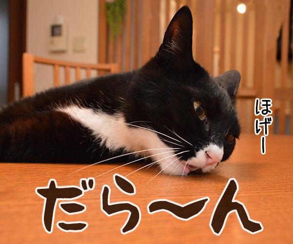 明日からお仕事 猫の写真で4コマ漫画 2コマ目ッ
