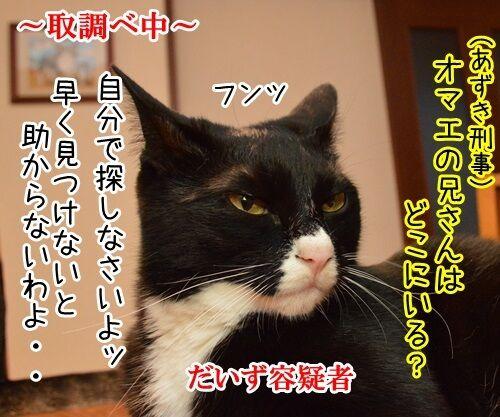 家に帰ろう 猫の写真で4コマ漫画 1コマ目ッ