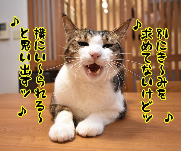瑛人の「香水」って曲は猫さんも大好きなんですってッ 猫の写真で4コマ漫画 2コマ目ッ