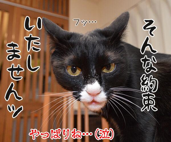 ドクターX 其の二 猫の写真で4コマ漫画 4コマ目ッ