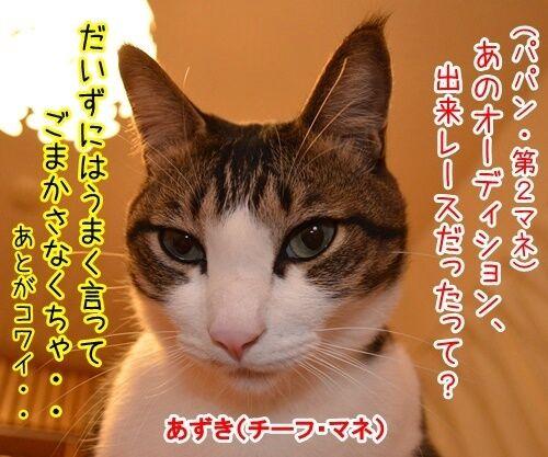出来レース 猫の写真で4コマ漫画 1コマ目ッ