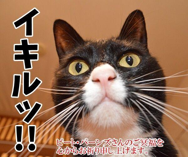 デッド・オア・アライヴのピート・バーンズさんが…… 猫の写真で4コマ漫画 4コマ目ッ