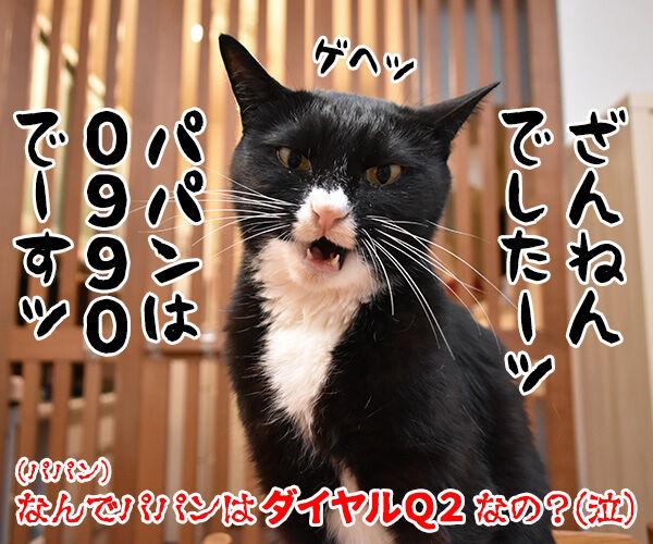 サイボーグ009ごっこするよーッ 猫の写真で4コマ漫画 4コマ目ッ